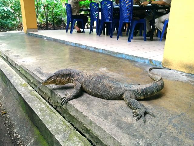 インドネシアに住むコモドオオトカゲ