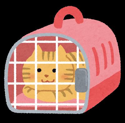キンカジューのケージはネコのもので代用可能だそうです。