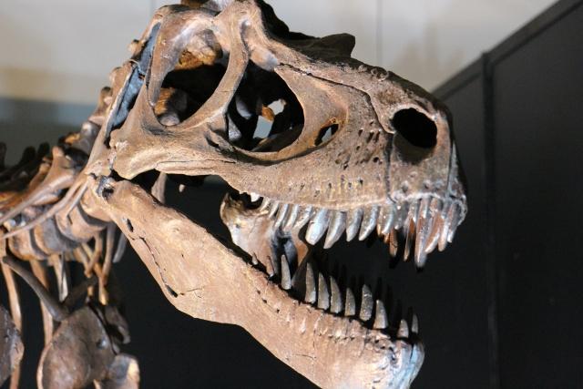 アルテミアは生きた化石といわれている