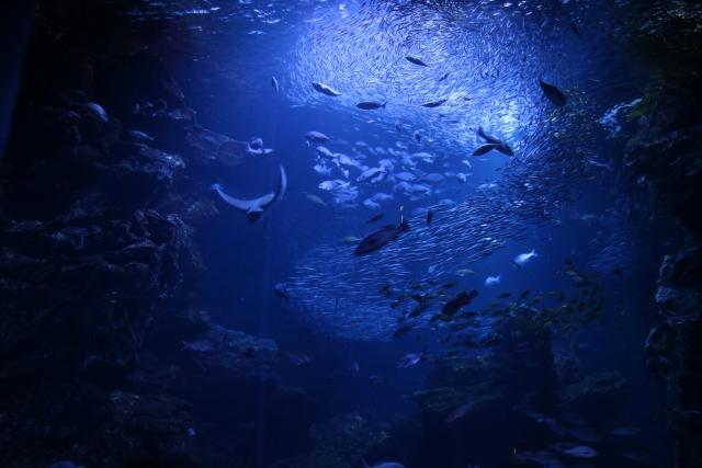 ヌタウナギの生息する深海