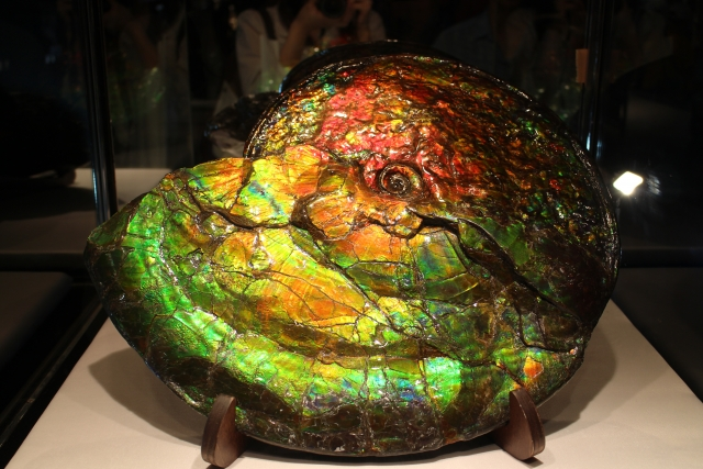 アンモナイトの化石が変化したアンモライト